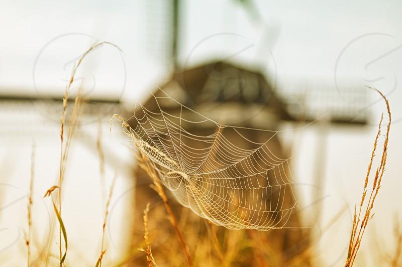 web windmill photo