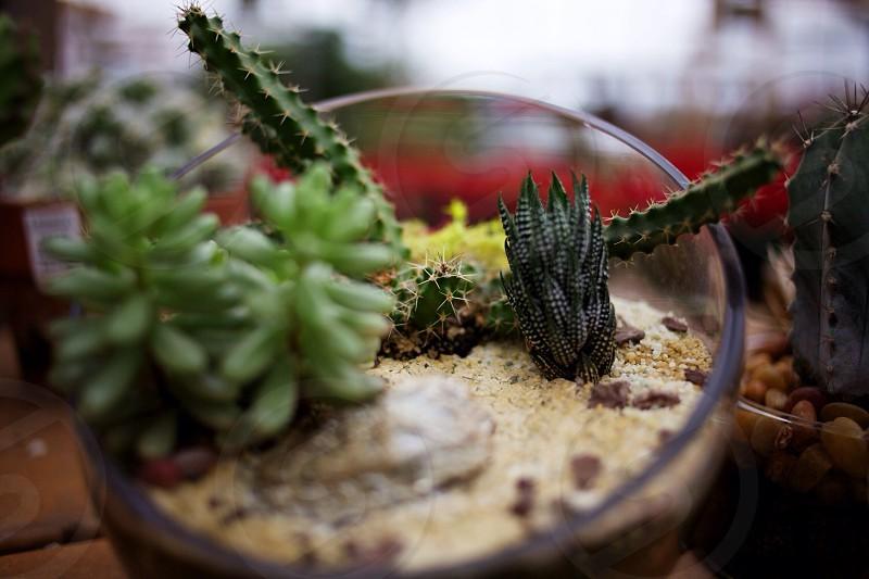 green succulent palnt photo