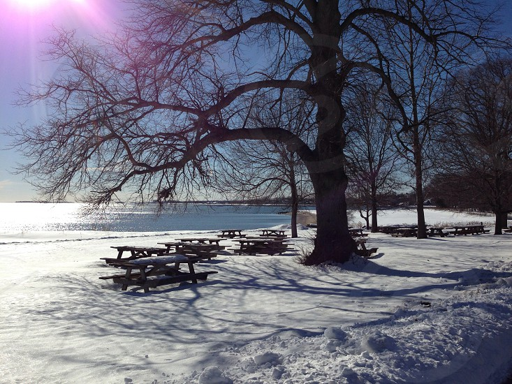 leafless tree and wooden bench filled with snow on sunny day photography photo