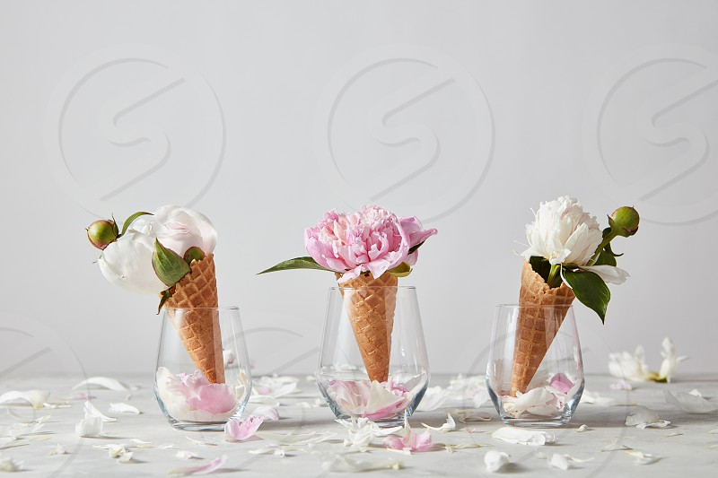 Blooming white and pink pions with buds green leaf petals in a wafer cones glasses on a gray background place for text. Summer concept of congratulations for Mothers Day. photo