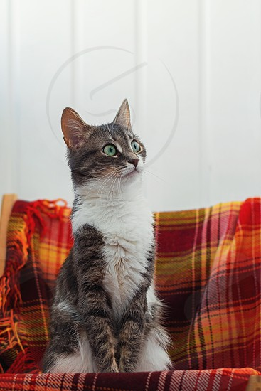 brown and white short fur cat on red and white textile photo