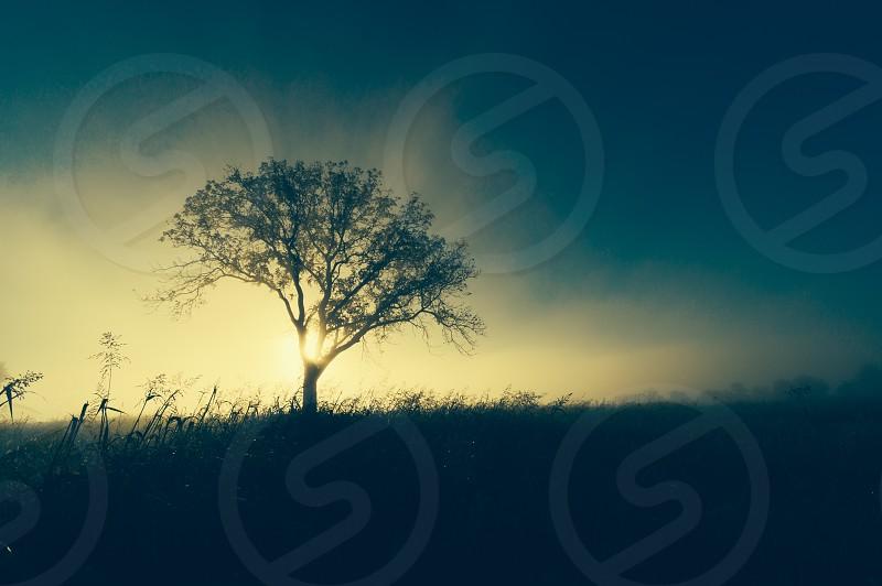 tree at sunset photo