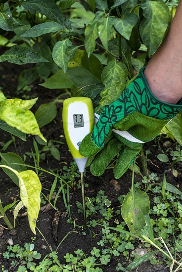 Moisture meter tester in soil. Measure soil for humidity with digital device. Woman farmer in a garden. Concept for new technology in the agriculture. photo