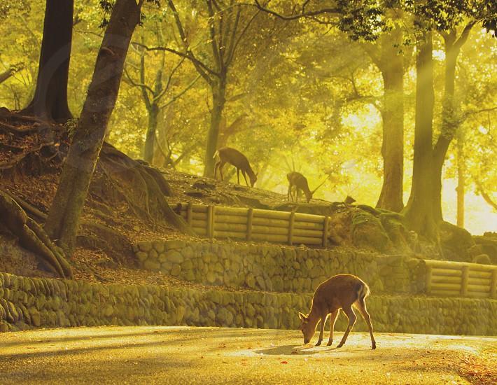 #deer #morning   #NaraJapan #nature #wild #animal #forest photo