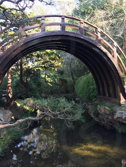Japanese tea garden golden gate park San Francisco zen peaceful garden travel serenity bridge bonsai photo