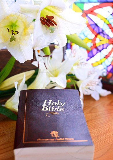 Easter Lily and Bible photo