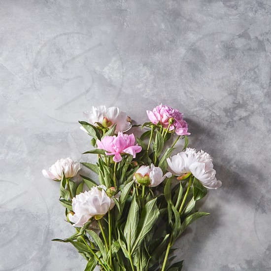 Bouquet of beautiful pink peony with buds on a gray concrete background with copy space for text. Mother's Day gift. Flat lay photo