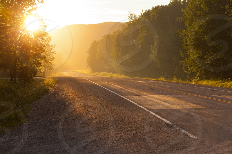 Sunrise or sunset on a deserted country road with the sun glowing brightly illuminating a row of conifers bordering the tar photo