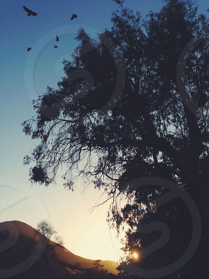 Crazy crows photo