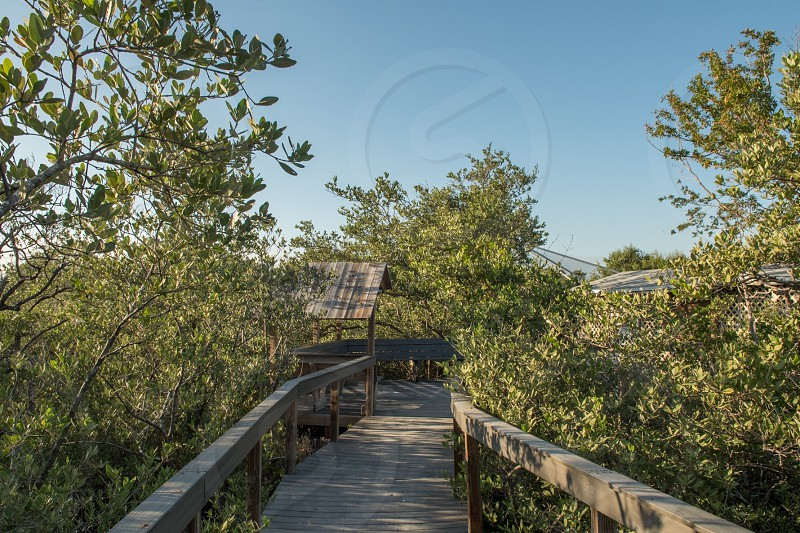 Tavernier  florida  key largo  bird  sanctuary  wild bird sanctuary  birds  trail  photo