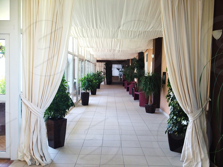 indoor potted green plant near white curtain photo