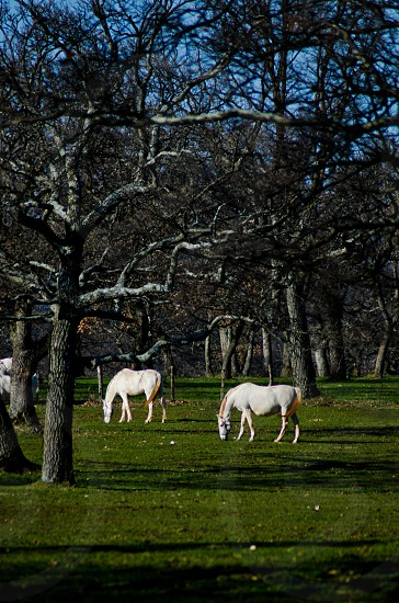 white horse on green grass lawn photo