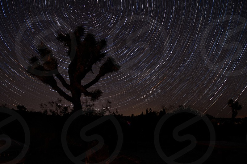 A Joshua tree surrounded by stars photo