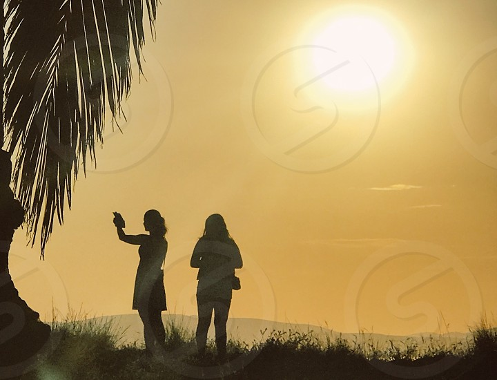 Silhouette  silhouettes nature palm trees women nature sunset photo