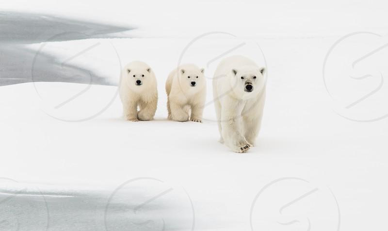 Wildlife 17 photo