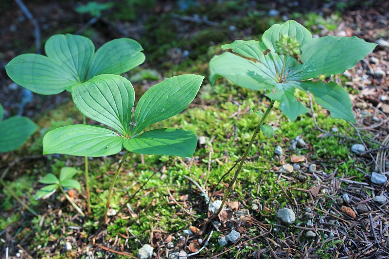 plants green forest photo