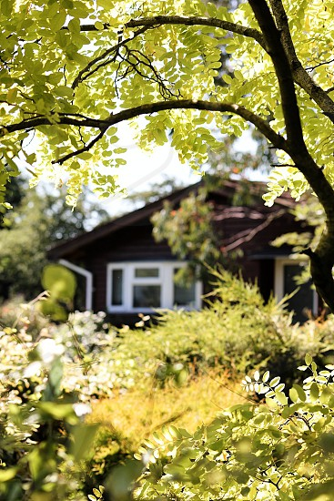 red house with white shutters in foliage photo