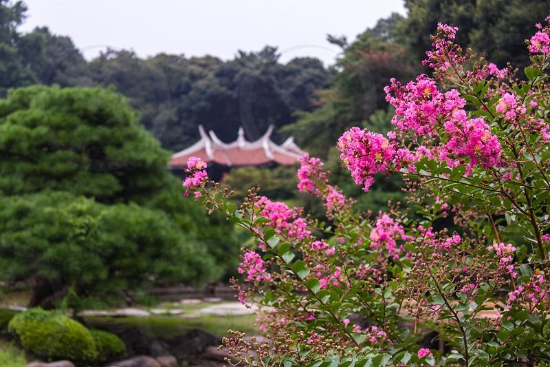 Shinjuku Goyen National Garden photo