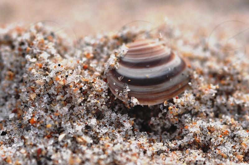 sand shell photo