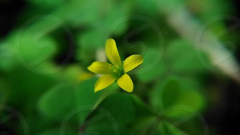 Yellow Flower photo
