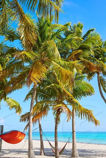 Key west florida Smathers beach palm trees in USA photo