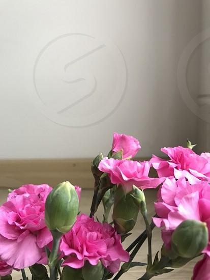 Pink flowers nature delicated petals flores naturaleza delicada pétalos amor romance decor love romantic decoración green verde photo