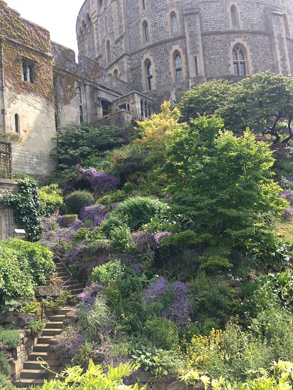 Dream garden photo