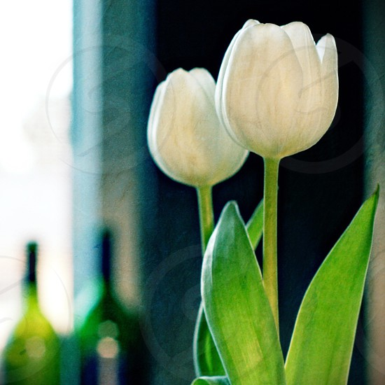 Tulips and wine.  photo