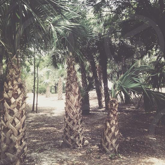 St. Andrews Panama City FL photo
