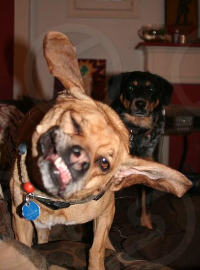 Goofy Dogs photo