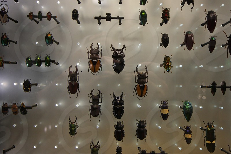 Beetles bugs. photo
