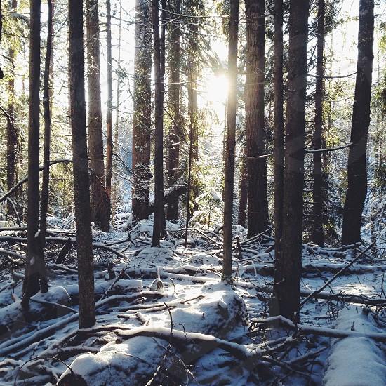 brown tree trunks photo