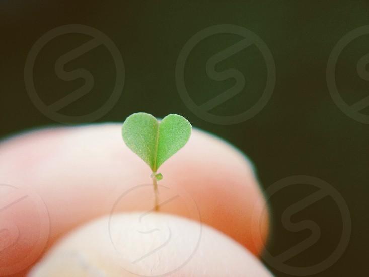 green heart shaped object photo