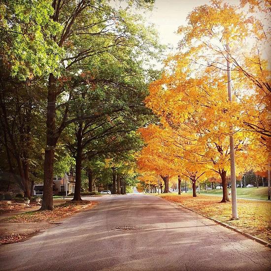 brown maple tree near road photo