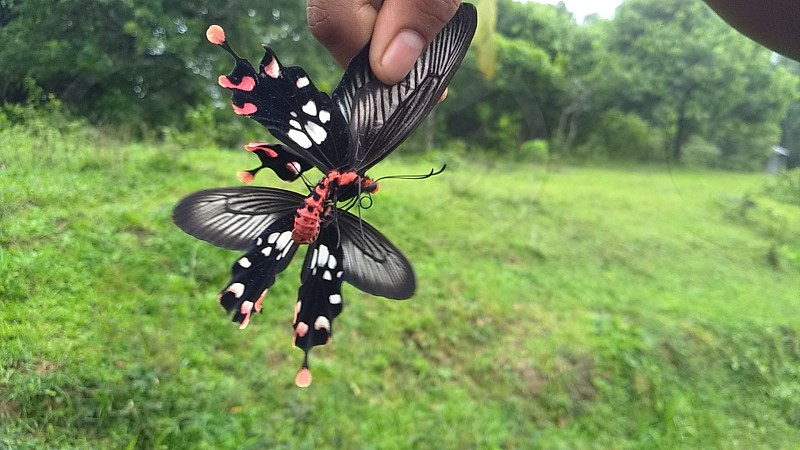 see twice think twice . #mating #couple #nature #butterfly #colours #life #insect #photography #hands #green #beauty  #contribution photo