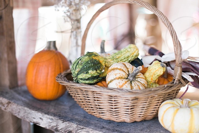 pumpkins and gourds in a basket photo