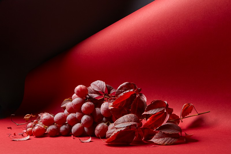 fresh bunch of red grapes with leaves on a red background photo
