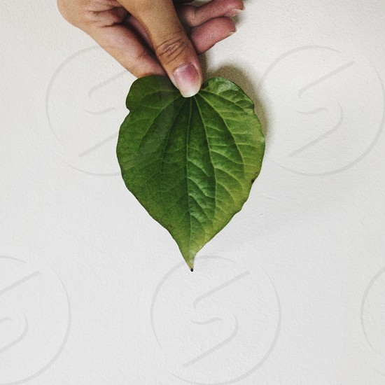 green heart shaped leaf on white surface photo
