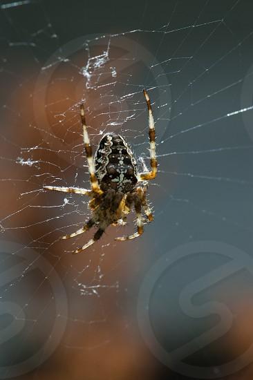 spider web dof photo