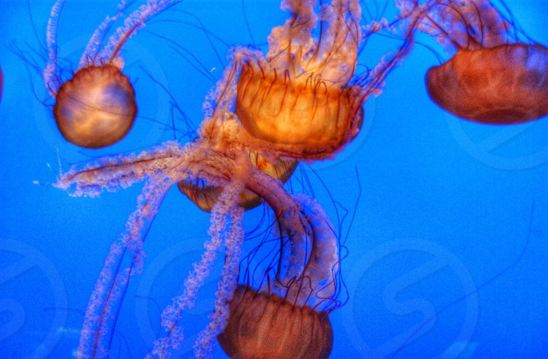 Monetary Bay aquarium   photo