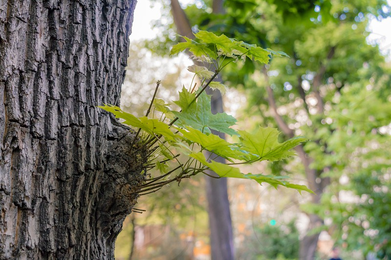 Trunk of tree with leaf buds on forest. photo