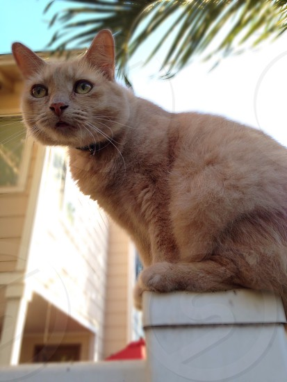 Candid kitty photo