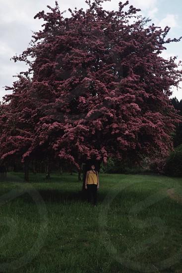 Girl tree cute adventure explore inspire  photo
