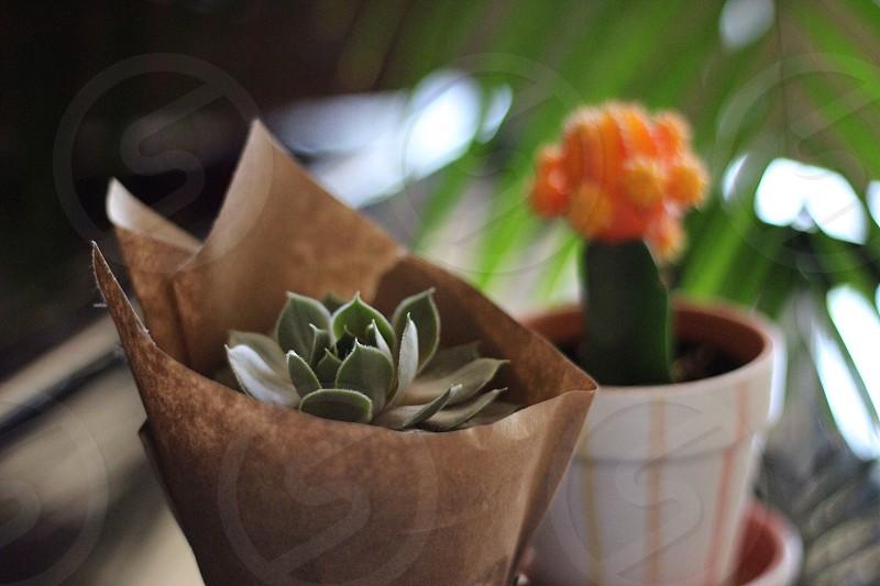 green succulents and orange cactus plants photo