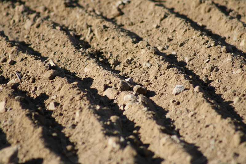Organized Dirt  photo