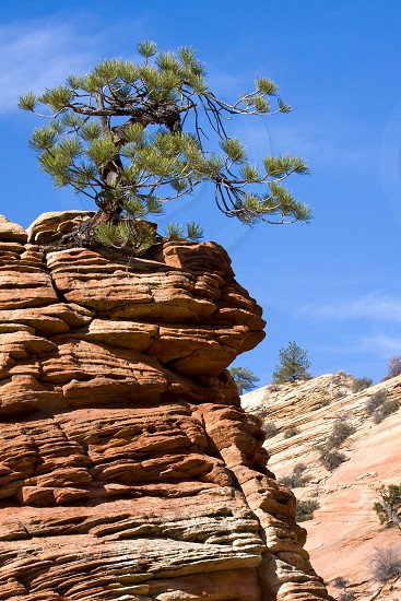 Stunted Tree on a Rocky Outcrop photo