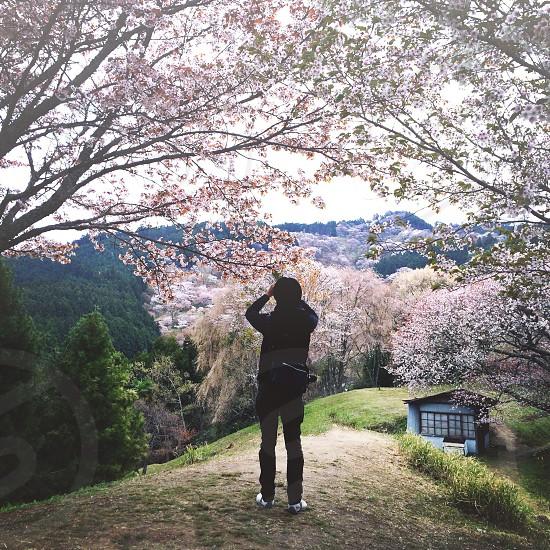 woman taking photo on tree photo