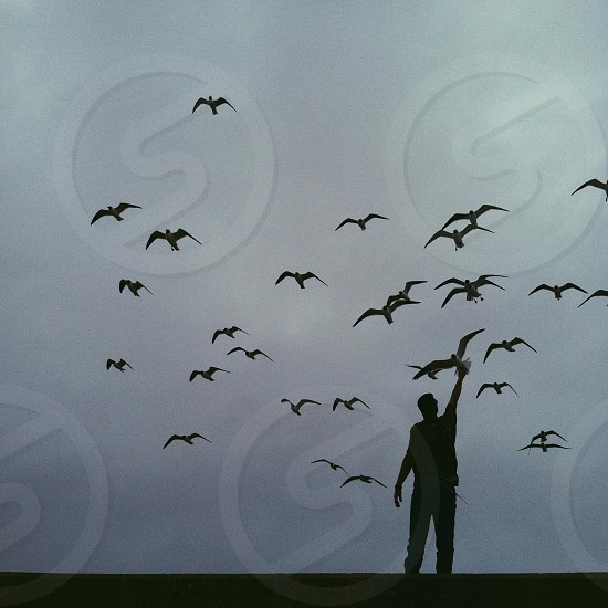 man silhouette with birds  photo