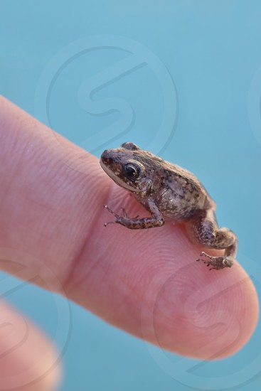 Little frog  photo