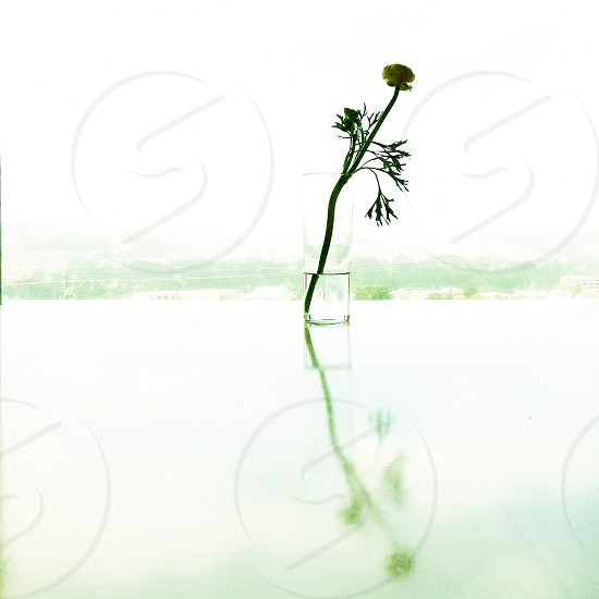 Flower in vase silhouetted.  photo